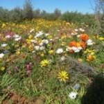 Wildbüten Tour - Namaqua - Touraco Tours