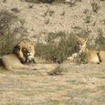 Touraco Travel Services - Wildblumen Tour