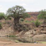 Baobab Baum - Touraco tours